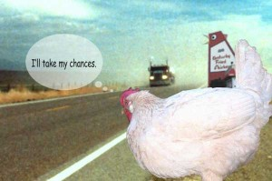 LETTER: Dominicans stop playing chicken on the roads