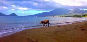 PHOTO OF THE DAY: Strolling on the beach