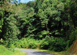PHOTO OF THE DAY: A drive through nature