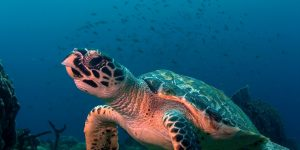 Commentary: World Ocean's Day