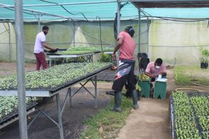 Min of Agriculture to assist farmers with backyard gardening