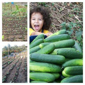 Fresh food market initiative to begin in Bataca