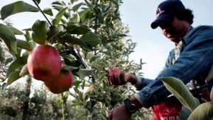 More Dominican agricultural workers leave for Canada in July