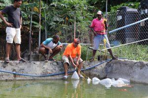 Aquaculture farming in Dominica making strides